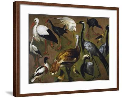 Study of Birds, by Alexandre-Francois Desportes (1661-1743), France, 18th Century-Alexandre-Francois Desportes-Framed Giclee Print