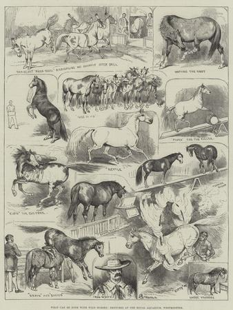 What Can Be Done with Wild Horses, Sketches at the Royal Aquarium, Westminster-Alfred Courbould-Framed Giclee Print