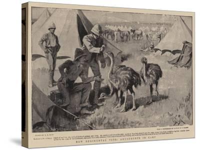New Regimental Pets, Amusements in Camp-Alexander Stuart Boyd-Stretched Canvas Print