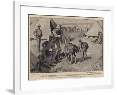 New Regimental Pets, Amusements in Camp-Alexander Stuart Boyd-Framed Giclee Print