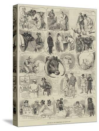 Sketches at the Birmingham Fat Cattle Show-Alfred Courbould-Stretched Canvas Print