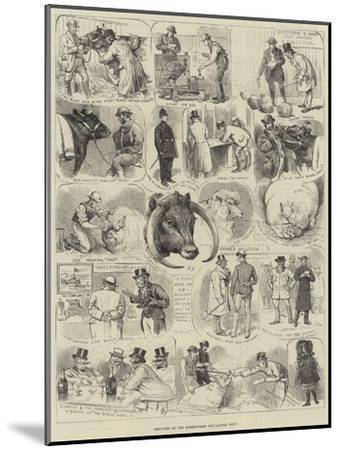 Sketches at the Birmingham Fat Cattle Show-Alfred Courbould-Mounted Giclee Print