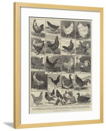 The Poultry Show at the Crystal Palace-Alfred Courbould-Framed Giclee Print