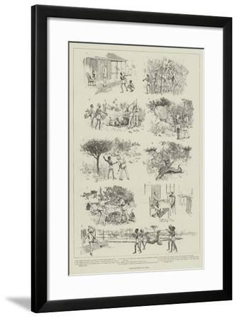 Tiger-Shooting in India-Amedee Forestier-Framed Giclee Print