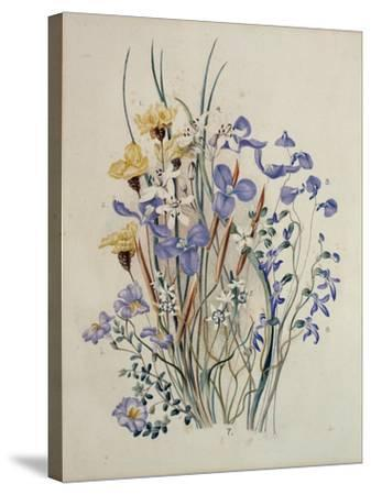 Spring Flowers, 19th Century-Caroline Louisa Meredith-Stretched Canvas Print