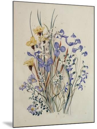Spring Flowers, 19th Century-Caroline Louisa Meredith-Mounted Giclee Print