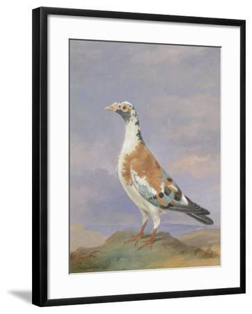 Grizzle Carrier Pigeon-D. the Younger Wolstenholme-Framed Giclee Print