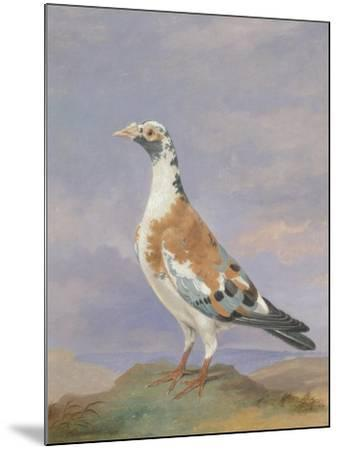 Grizzle Carrier Pigeon-D. the Younger Wolstenholme-Mounted Giclee Print