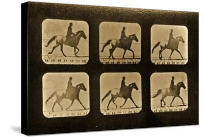 Horses. Irregular, 'Animal Locomotion' Series, C.1881-Eadweard Muybridge-Stretched Canvas Print