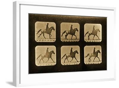 Horses. Irregular, 'Animal Locomotion' Series, C.1881-Eadweard Muybridge-Framed Giclee Print