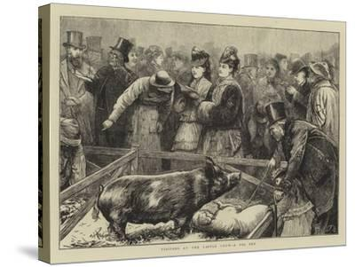Visitors at the Cattle Show, a Pig Pen-Edward Frederick Brewtnall-Stretched Canvas Print