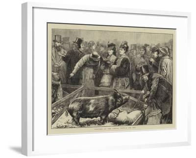Visitors at the Cattle Show, a Pig Pen-Edward Frederick Brewtnall-Framed Giclee Print