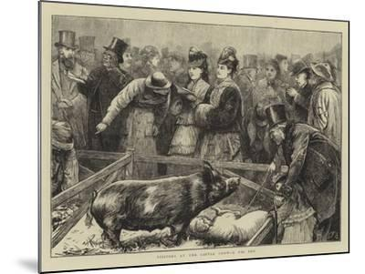 Visitors at the Cattle Show, a Pig Pen-Edward Frederick Brewtnall-Mounted Giclee Print