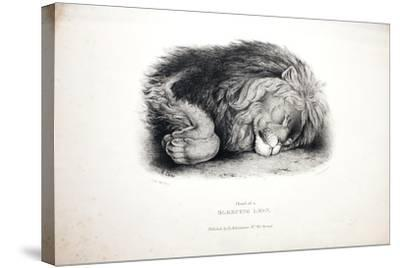 Sketches of Animals at the Zoological Gardens-Edward Lear-Stretched Canvas Print