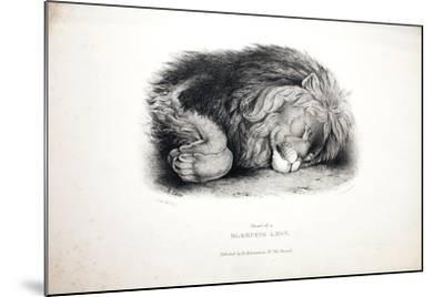 Sketches of Animals at the Zoological Gardens-Edward Lear-Mounted Giclee Print