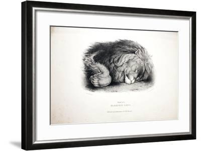 Sketches of Animals at the Zoological Gardens-Edward Lear-Framed Giclee Print