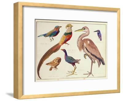 Studies of Birds from the Bootle Museum, Liverpool-Florence Emily Bark-Framed Giclee Print