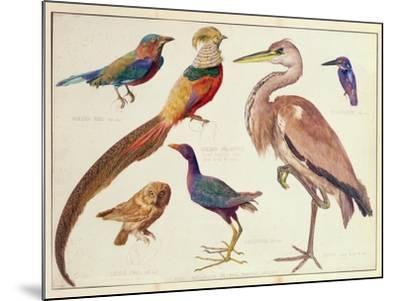 Studies of Birds from the Bootle Museum, Liverpool-Florence Emily Bark-Mounted Giclee Print