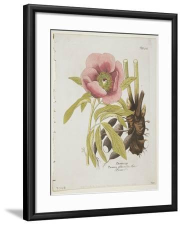 Paeonie-Ferdinand Bernhard Vietz-Framed Giclee Print