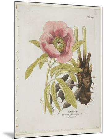 Paeonie-Ferdinand Bernhard Vietz-Mounted Giclee Print
