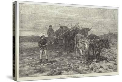 Ploughing on the Sussex Downs-Frank Dadd-Stretched Canvas Print