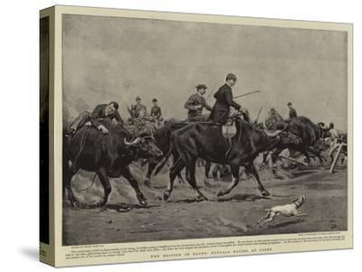 The British in Egypt, Buffalo Racing at Cairo-Frank Dadd-Stretched Canvas Print