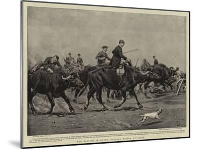 The British in Egypt, Buffalo Racing at Cairo-Frank Dadd-Mounted Giclee Print