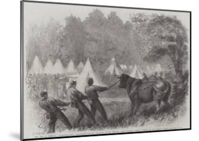 The War in America, Quartermaster's Department, Killing Bullocks in the Federal Camp, Virginia-Frederick John Skill-Mounted Giclee Print