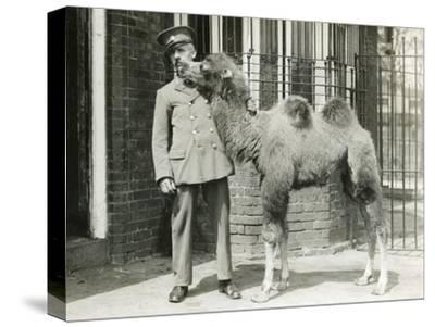 A Bactrian Camel Calf-Frederick William Bond-Stretched Canvas Print