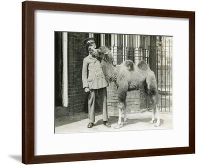 A Bactrian Camel Calf-Frederick William Bond-Framed Photographic Print