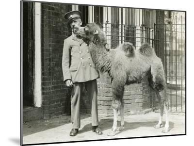 A Bactrian Camel Calf-Frederick William Bond-Mounted Photographic Print
