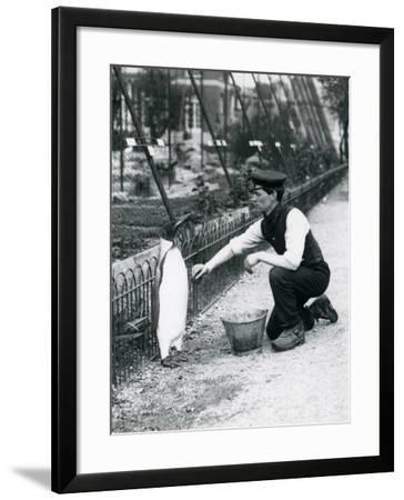 King Penguin-Frederick William Bond-Framed Giclee Print