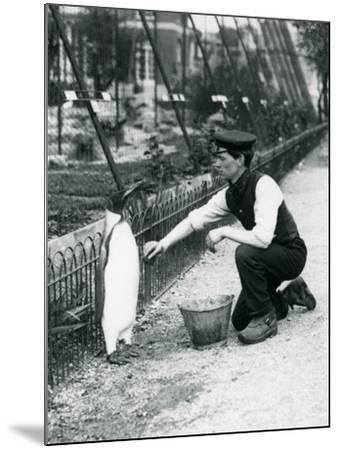 King Penguin-Frederick William Bond-Mounted Giclee Print