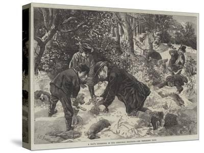 A Day's Ferreting in the Christmas Holidays-George Bouverie Goddard-Stretched Canvas Print