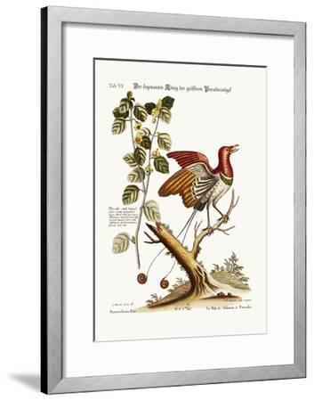 The Supposed King of the Greater Birds of Paradise, 1749-73-George Edwards-Framed Giclee Print
