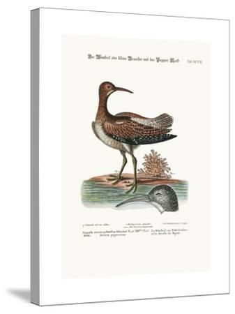 The Whimbrel, or Lesser Curlew, and the Paper-Moss, 1749-73-George Edwards-Stretched Canvas Print