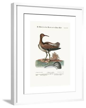 The Whimbrel, or Lesser Curlew, and the Paper-Moss, 1749-73-George Edwards-Framed Giclee Print