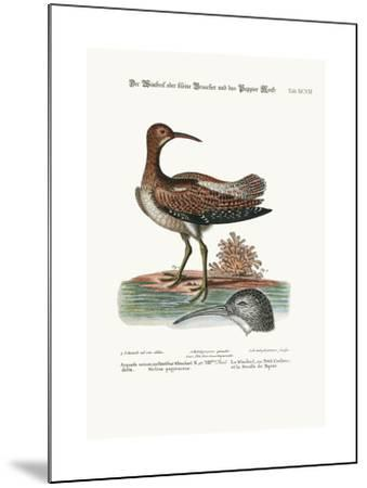 The Whimbrel, or Lesser Curlew, and the Paper-Moss, 1749-73-George Edwards-Mounted Giclee Print