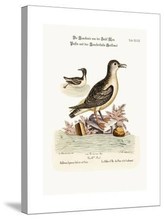 The Puffin of the Isle of Man, and the Guillemot, 1749-73-George Edwards-Stretched Canvas Print
