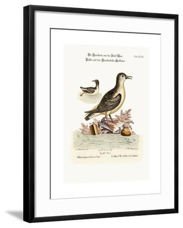 The Puffin of the Isle of Man, and the Guillemot, 1749-73-George Edwards-Framed Giclee Print