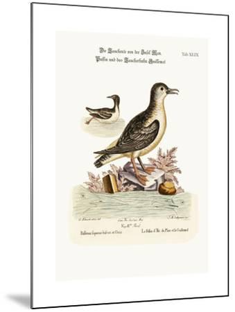 The Puffin of the Isle of Man, and the Guillemot, 1749-73-George Edwards-Mounted Giclee Print