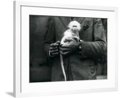 An Albino Old World Monkey, Genus Ceropithecus, Being Held at London Zoo, July 1922-Frederick William Bond-Framed Photographic Print