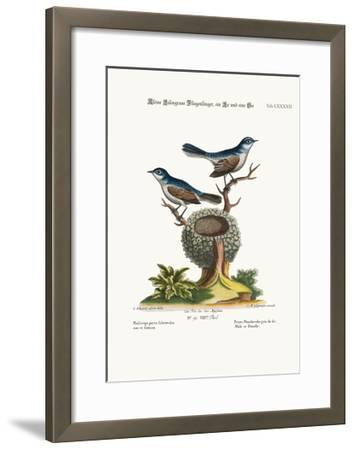 The Little Blue-Grey Flycatchers, Cock and Hen, 1749-73-George Edwards-Framed Giclee Print