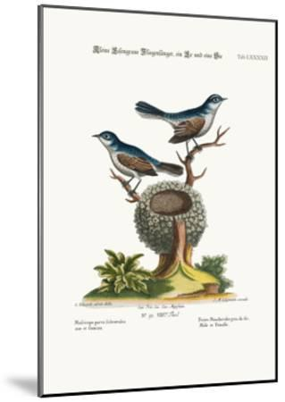 The Little Blue-Grey Flycatchers, Cock and Hen, 1749-73-George Edwards-Mounted Giclee Print