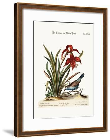The Blue-Bellied Finch. the Narcissus Jacobea, 1749-73-George Edwards-Framed Giclee Print