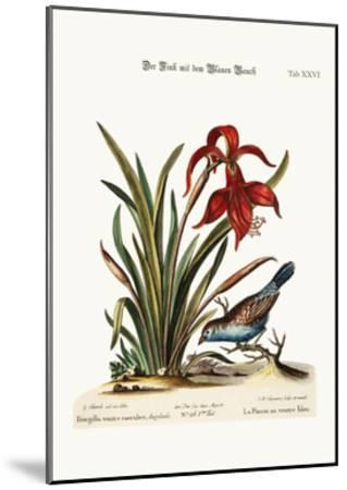 The Blue-Bellied Finch. the Narcissus Jacobea, 1749-73-George Edwards-Mounted Giclee Print