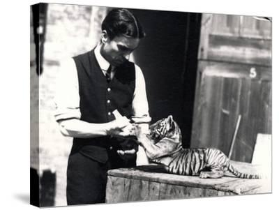Tiger Cub Being Fed by Keeper Harry Warwick, 1914-Frederick William Bond-Stretched Canvas Print