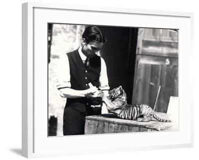 Tiger Cub Being Fed by Keeper Harry Warwick, 1914-Frederick William Bond-Framed Photographic Print