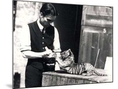 Tiger Cub Being Fed by Keeper Harry Warwick, 1914-Frederick William Bond-Mounted Photographic Print