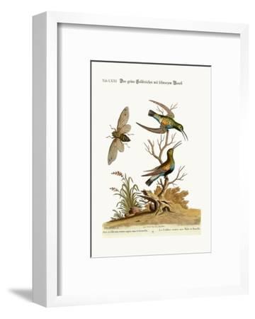 The Black-Bellied Green Hummingbird, 1749-73-George Edwards-Framed Giclee Print